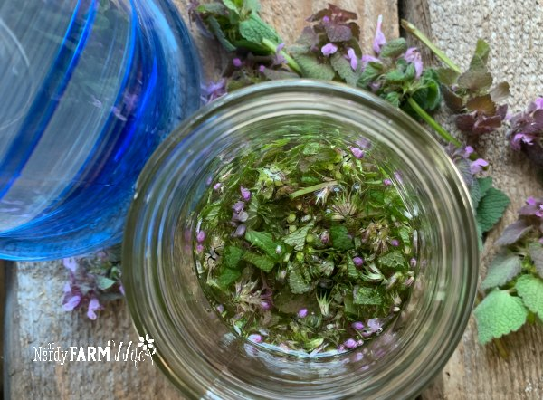 glass jar filled with chopped purple dead nettle and alcohol, on a wooden background, beside a blue bottle
