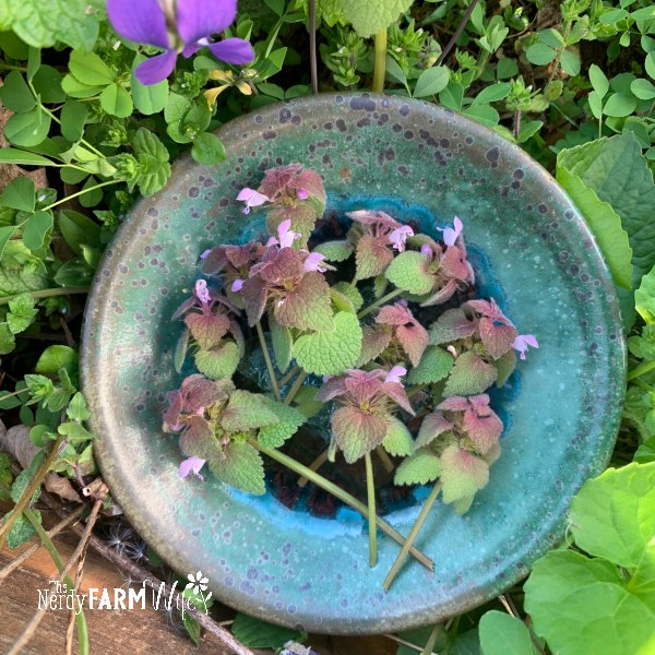 small turquoise pottery saucer with purple dead nettle herb sprigs on top