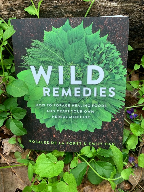 a book about wild herbal remedies surrounded by chickweed and wild violets