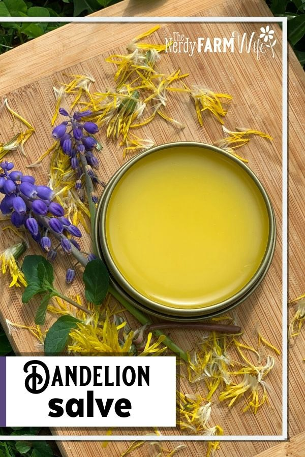tin of dandelion salve on a bamboo cutting board surrounded by fresh dandelion petals and grape hyacinth flowers