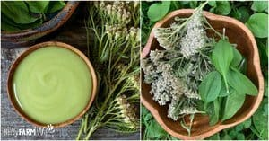 small wooden bowl of green herbal balm with fresh yarrow and plantain leaves