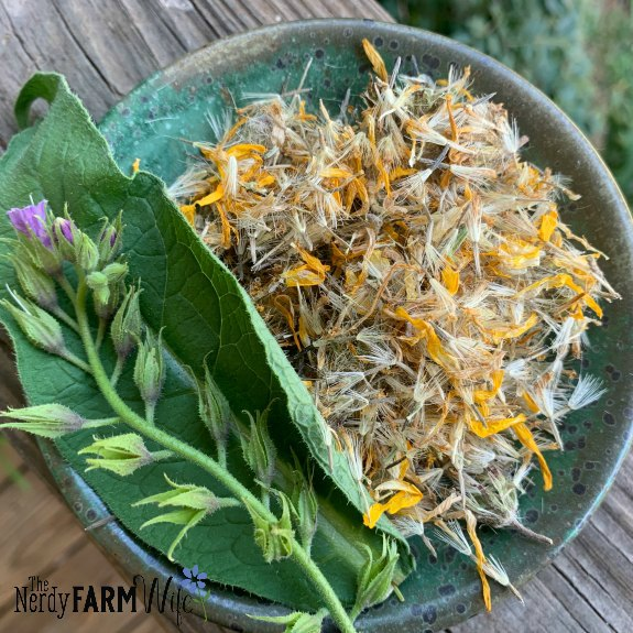 dried arnica flowers and fresh comfrey leaves and flowers on a small pottery saucer