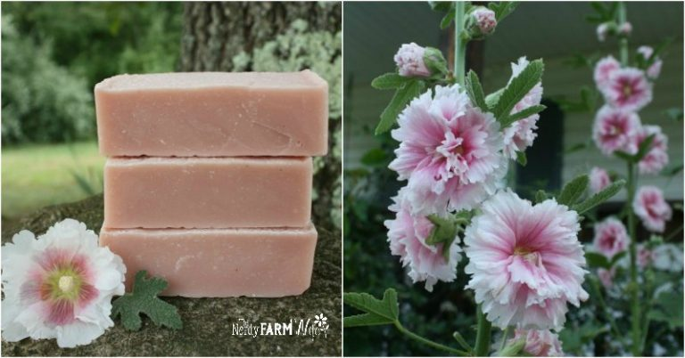 Hollyhock Flower Soap Recipe