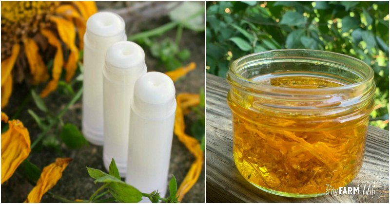 tubes of lip balm and sunflower infused oil in a jar