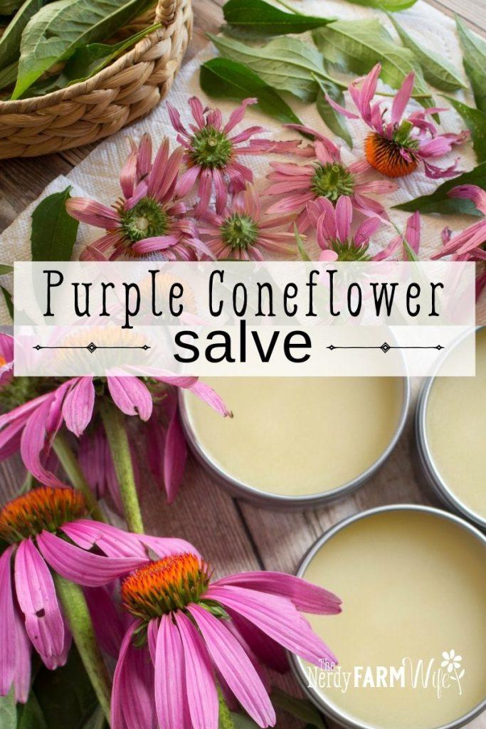 dried purple coneflowers and salve