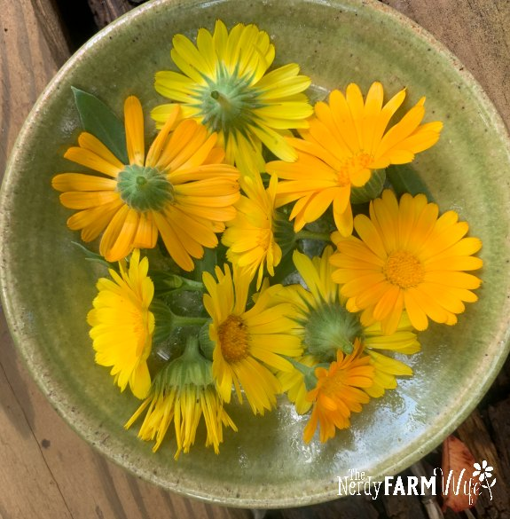small plate of fresh calendula flowers and leaves