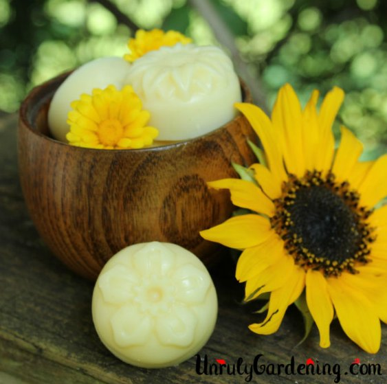 small lotion bars in a wooden bowl with sunflower