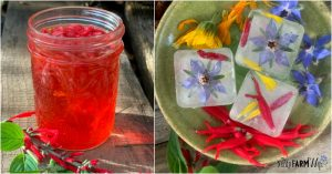 jar of infused vinegar and ice cubes made with edible flowers