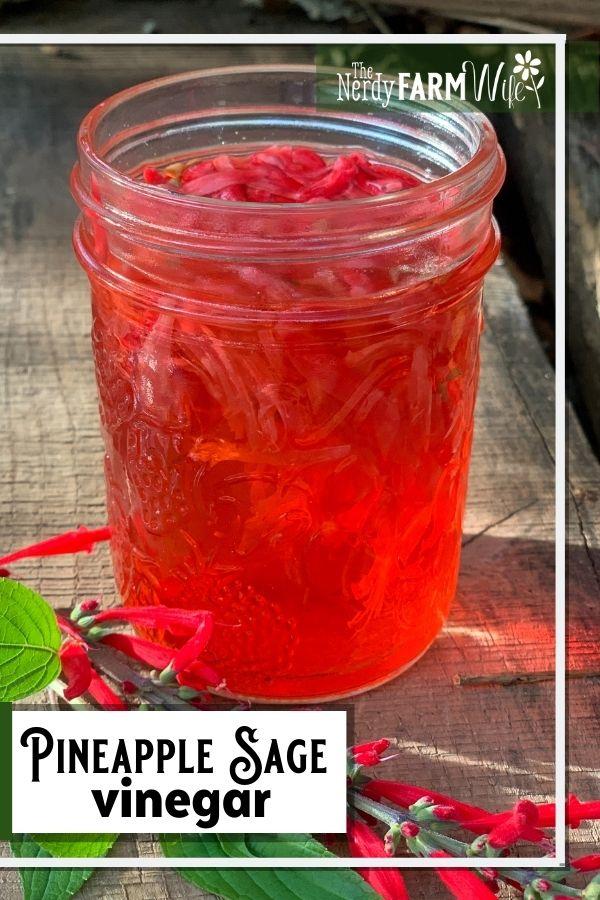 jar of vinegar infused with pineapple sage flowers
