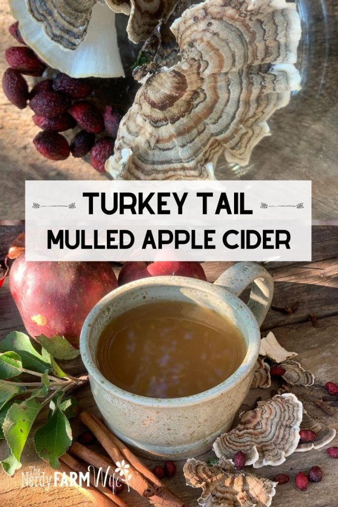 "turkey tail mushrooms and mulled apple cider in a rustic pottery mug, text says ""Turkey Tail Mulled Apple Cider"""