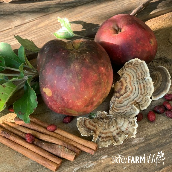 apples, cinnamon sticks, turkey tail mushroom, spicebush berries on a wooden board