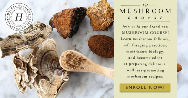 advertisement for The Mushroom Course at the Herbal Academy