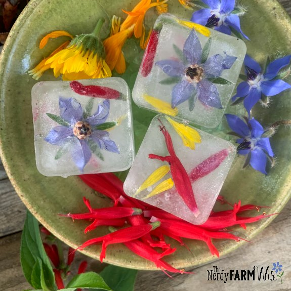small saucer with frozen ice cubes made with pineapple sage, calendula, borage flowers