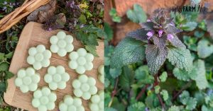 closeup of purple dead nettle plant and flower shaped lotion bars
