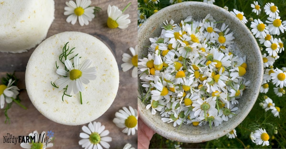 bowl of chamomile flowers and a bath bomb with fresh flowers