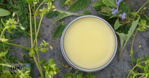 tin of salve surrounded by fresh herbs