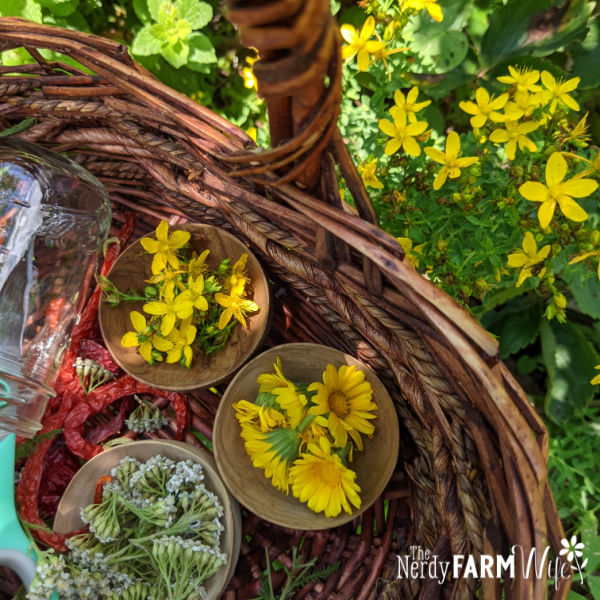 basket of St John's Wort and other herbs