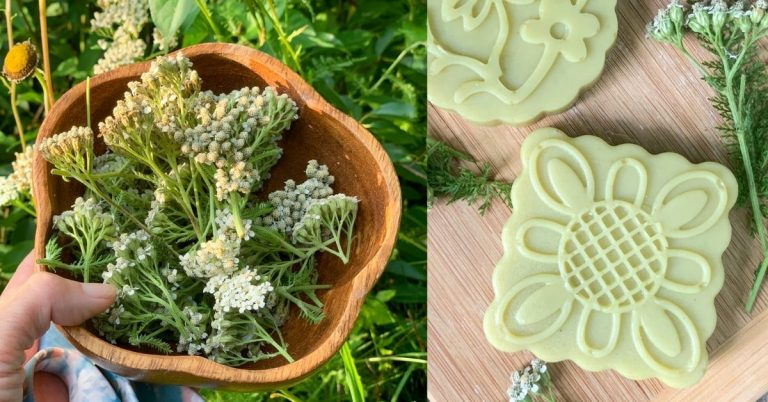 Yarrow Soap Recipe {cold process}