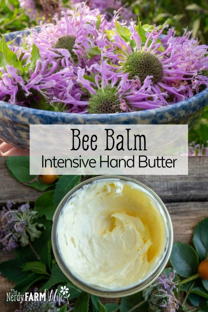 bowl of fresh bee balm flowers above jar of bee balm whipped hand butter