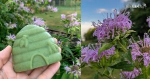 woman's hand holding bar of beehive shaped soap; fresh bee balm growing
