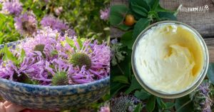bowl of fresh bee balm flowers beside jar of bee balm whipped hand butter