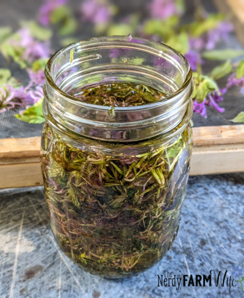 jar of oil with dried bee balm flowers and leaves