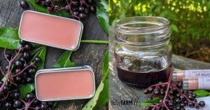 rectangular tins of lip balm surrounded by fresh elderberries; jar of infused oil beside lip balms