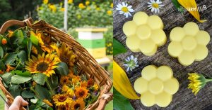 basket of sunflowers and calendula beside flower shaped lotion bars