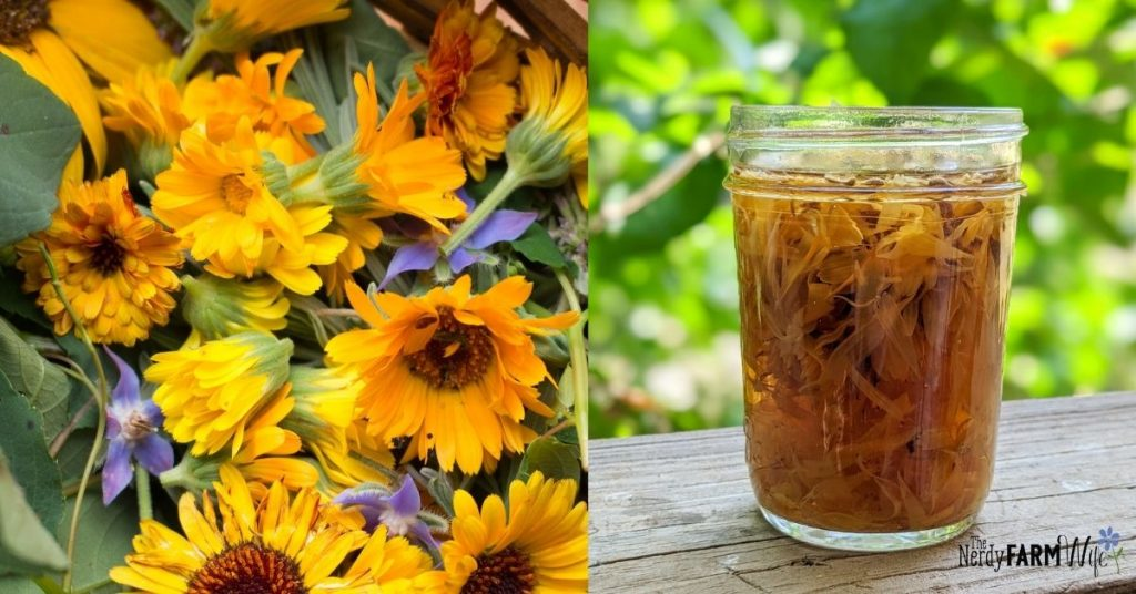 calendula flowers and jar of calendula tea