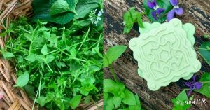 basket of chickweed and violet leaves, beside square decorative soaps