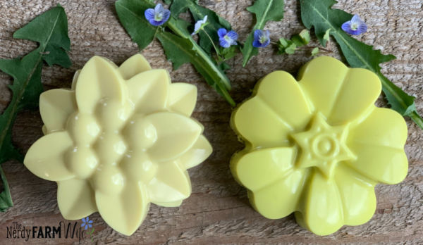 comparison of 1 year old dandelion soap and fresh dandelion melt and pour soap
